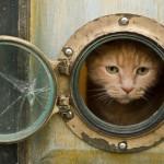 猫と快適に暮らすインテリアの作り方と31の具体的実例