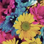 ソファがアート!色を効果的に使ったカラフルなソファのある風景17選