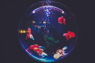 aruarium